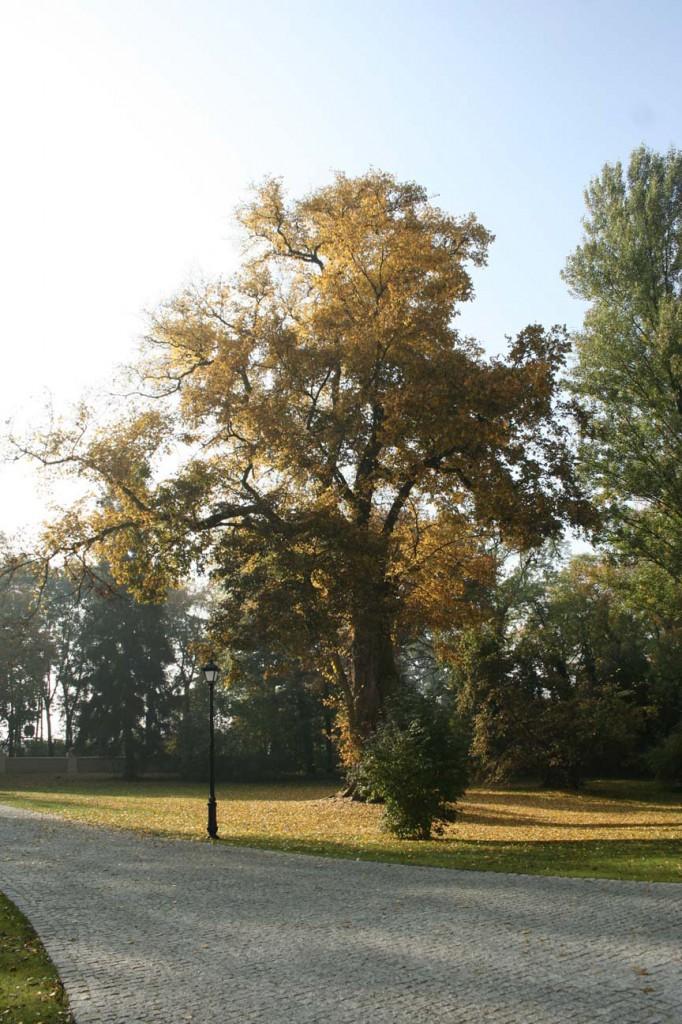 Polana, droga w parku zabytkowym, jesień