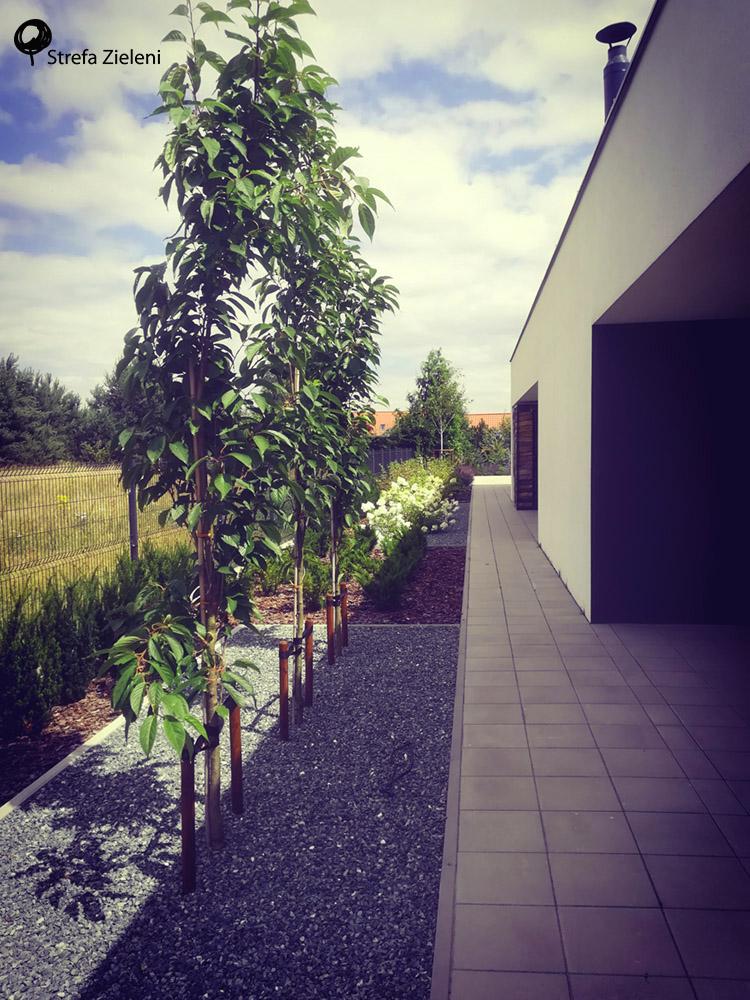 Ogród przy nowoczesnej architekturze, wiśnie kolumnowe, układ prostokątny