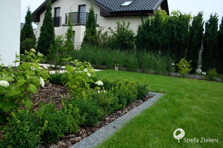 Miskanty, hortensje, trawnik, obrzeże, ogród przydomowy