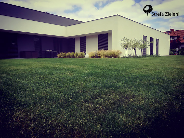 Nowoczesna architektura, trawnik, rabata przy budynku, ostnice, wierzby hakuro