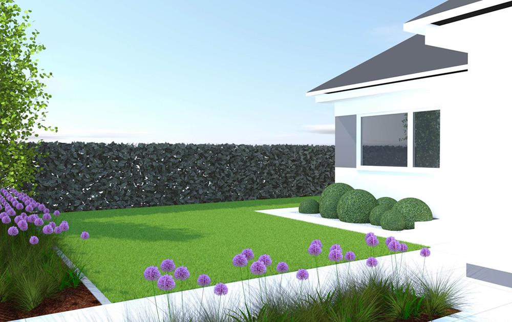 Ogród frontowy, czosnek ozdobny, bukszpan kule, wizualizacja, projekt ogrodu