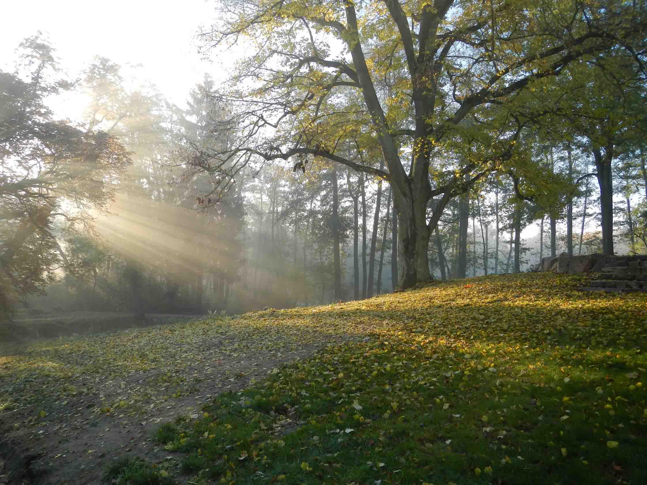 Droga w parku zabytkowym, jesień, światło