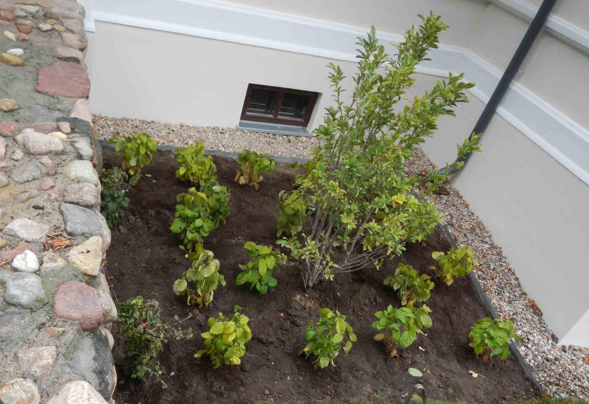 Nasadzenia roślin w parku zabytkowym