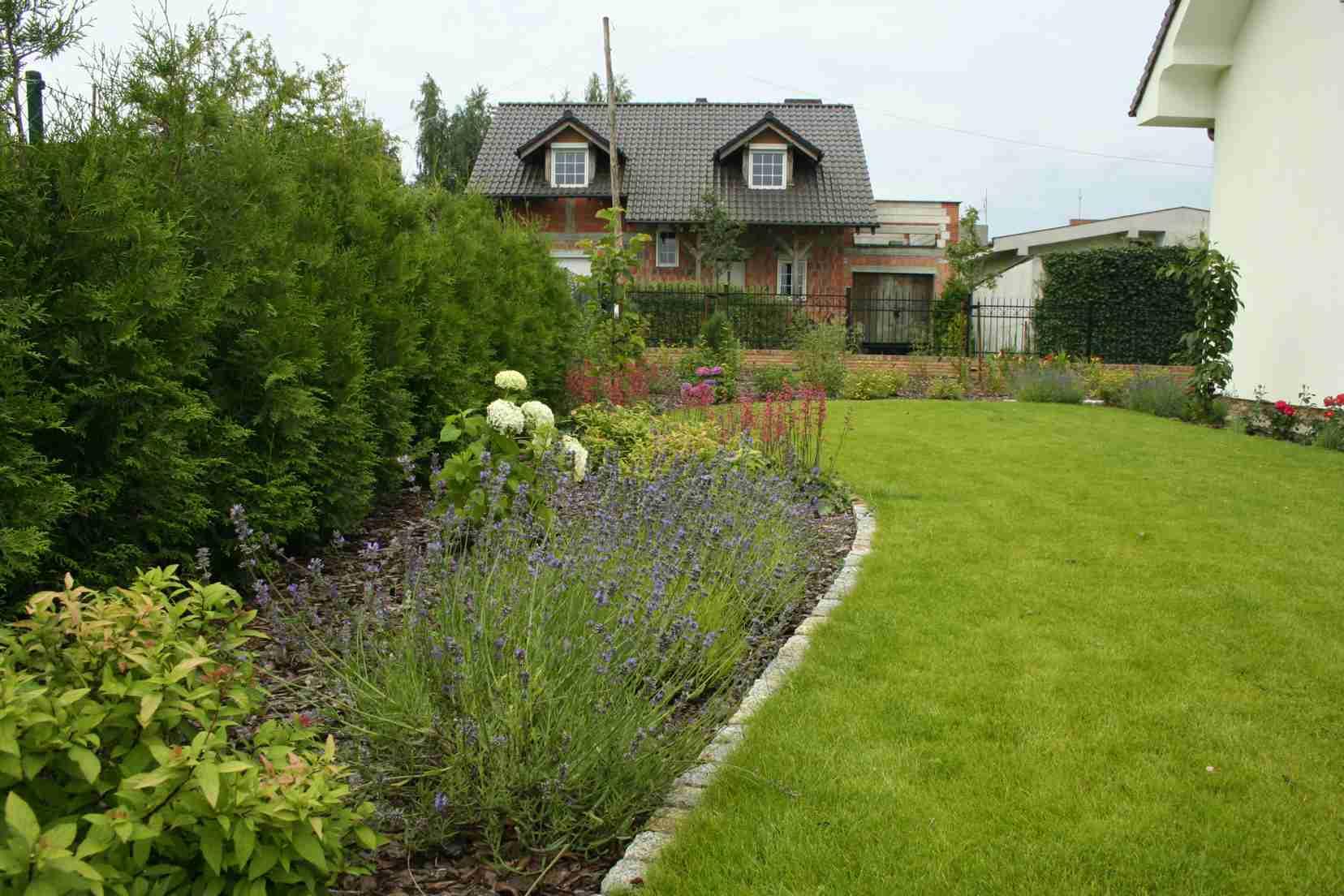 Ogród przydomowy, rabata z lawendami